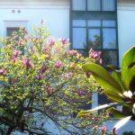 gallery-facciata-fiori